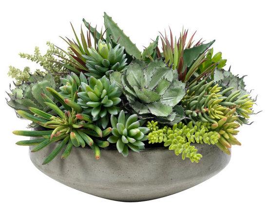 Large Succulent Planting -