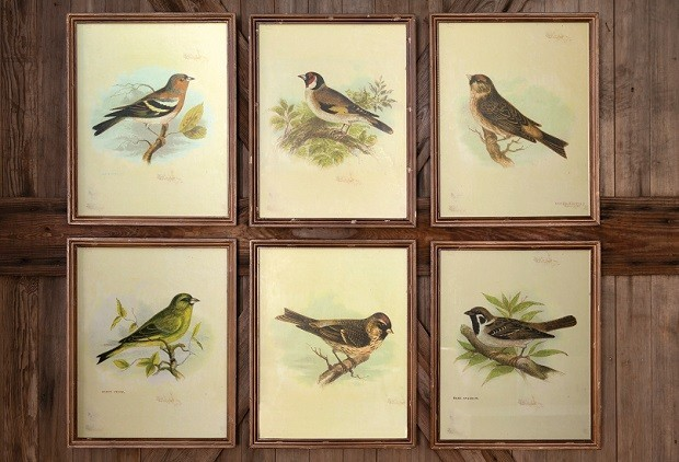 Framed Vintage Bird Prints, Set of 6 - other metro - by Antique Farmhouse
