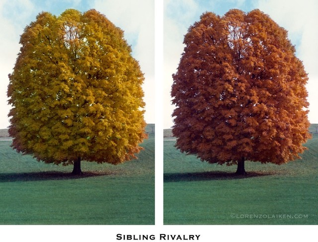 Sibling Rivalry Artwork contemporary-paintings