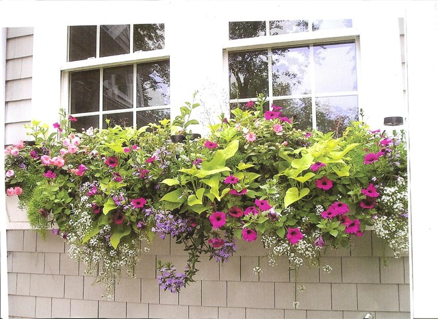 Window Boxes/ Container Gardens traditional-exterior