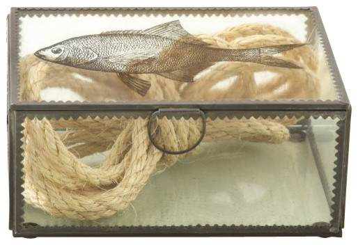 Sea Life Crimped Edge Transitional Box Transitional