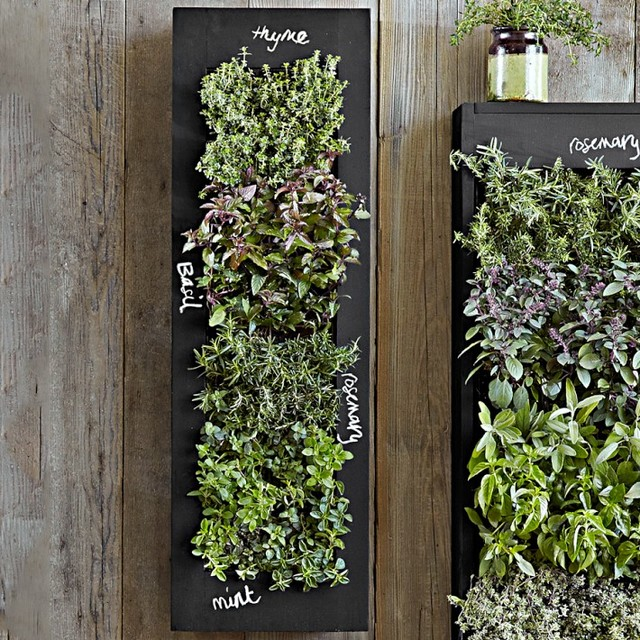 ... Wall Planter - Contemporary - Indoor Pots And Planters - by Williams