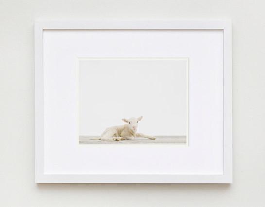 Lamb No.2 contemporary-artwork
