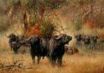 Buffalos canvas prints modern-artwork
