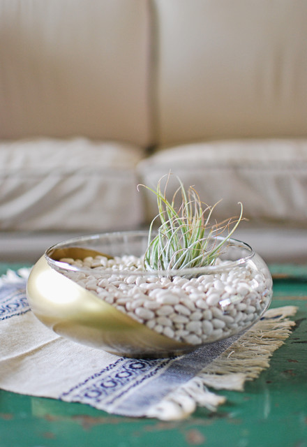 DIY Air Plant Terrarium8.jpg  