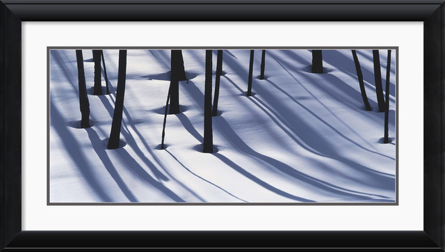 Pine Trees and Morning Shadows Framed Print by William Neill traditional-prints-and-posters