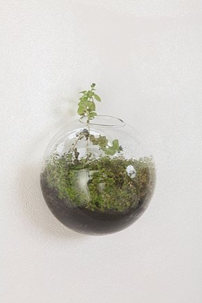 Glass Wall Bubble Vase contemporary-indoor-pots-and-planters