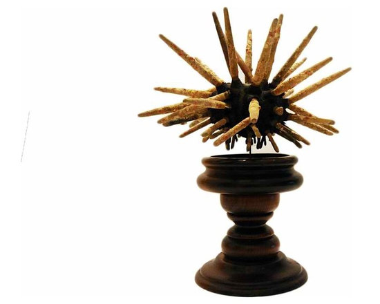 Sea Urchin - A very large sea urchin on a vintage mahogany wood plinth. Perfect object for displaying in a cabinet, or tabletop. A great addition to your collection of curiosities