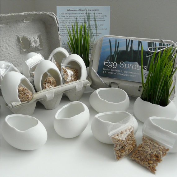 Porcelain Egg Planters Wheat Grass Kit Egg Sprouts by Eco Elements contemporary-indoor-pots-and-planters