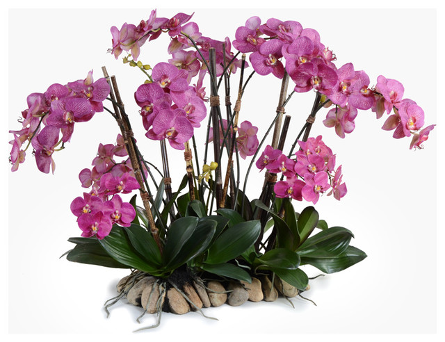 Dramatic Phalaenopsis Orchid Centerpiece Traditional