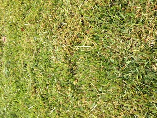 Best low maintenance lawn for Best low maintenance grass