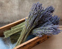 Dried Lavender Bunch traditional-home-decor
