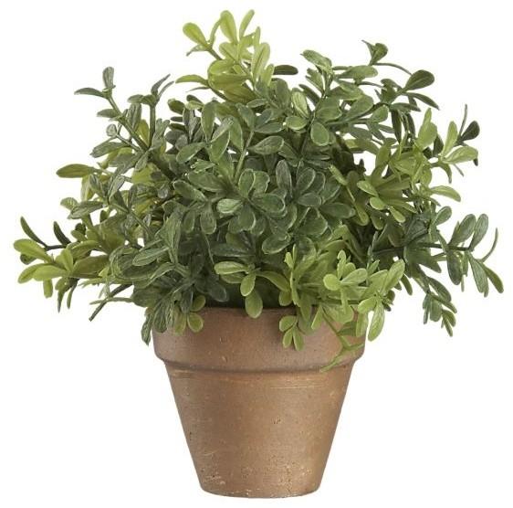 Mini Potted Boxwood modern-plants