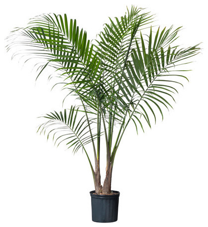 RAVENEA Potted plant modern plants