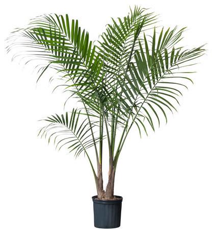 RAVENEA Potted plant modern-plants