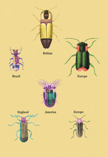 Beetles of America Britain Brazil England and Europe #2 12x18 Giclee on canvas contemporary-prints-and-posters