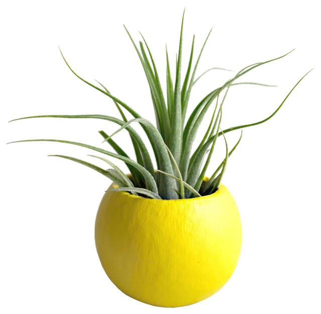 Mini air plant pod terrarium modern indoor pots and planters by dot amp bo