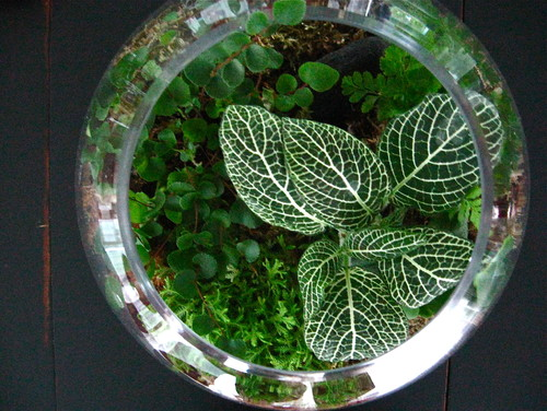 Terrariums and how to make them