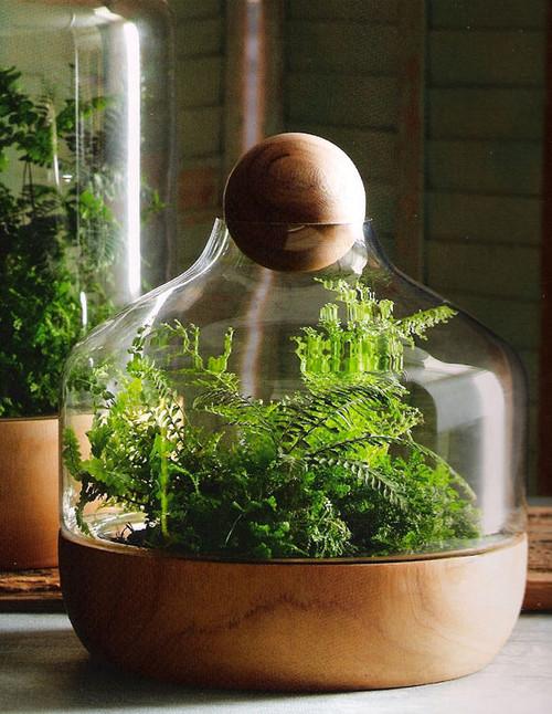 Creating a terrarium